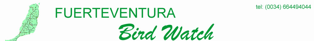 Fuerteventura Bird Watch, guided tours for birdwatchers visiting Fuerteventura